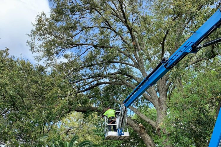 The How's and Why's of Tree Pruning: