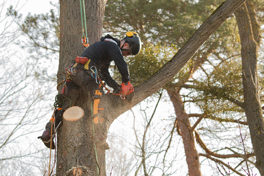 man cutting limb off tree