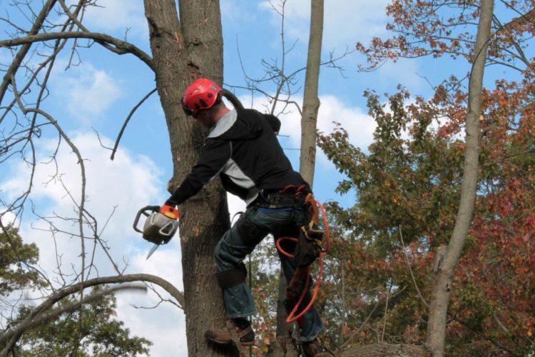 TREE Services IN ORLANDO