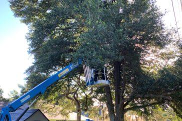 man in tree on crane