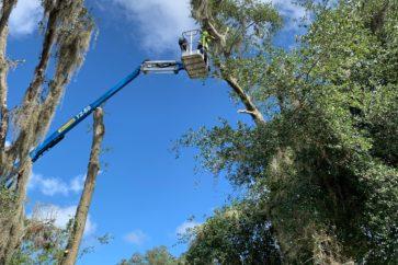 man on crane working on tree