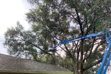 man on crane trimming tree