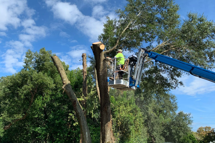 Tree Removal Permits and the Requirements